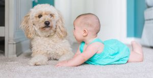 Scottsdale Carpet Cleaning