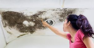 Mold Remediation Service Scottsdale